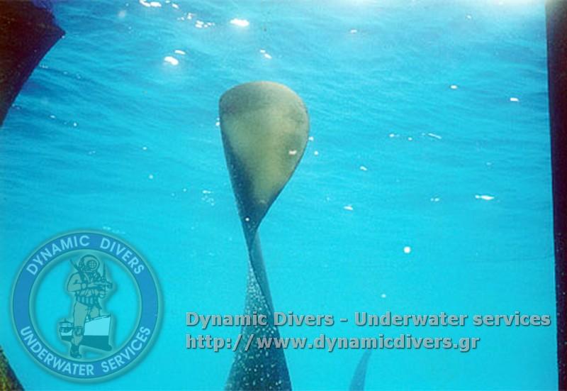 dynamic_divers00010