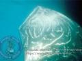 dynamic_divers00011